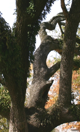 Tree CC 1
